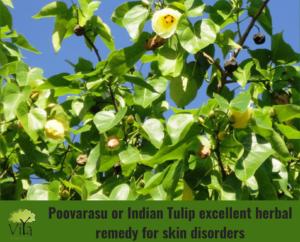 Natural Fencing - Poovarasu or Indian Tulip