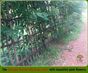 Natural Fencing methods - Sheema Konna